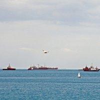 Морская жизнь кипит :: Коста Glad.Ko.V