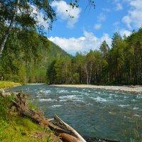 У реки Чемал. :: Валерий Медведев