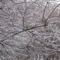 Зимняя красота :: Дмитрий Никитин