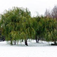With first snow :: Sergey Sergaj