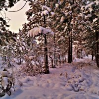 зима -зима :: Валерия Воронова