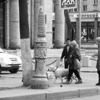 бабы с собачкой :: sv.kaschuk