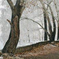 Холодное утро последнего дня октября :: Екатерина Торганская