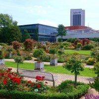 Сад роз в парке цветов :: Nina Yudicheva