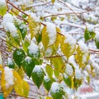 первый снег :: Oksana Verkhoglyad