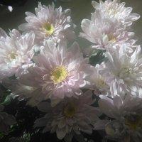 нежность.... :: Mariya laimite