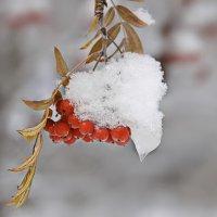 в объятиях зимы :: Svetlana Plasentsiia