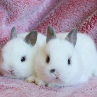 baby bunny 3 :: Natalya секрет