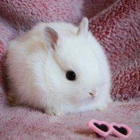 baby bunny 1 :: Natalya секрет