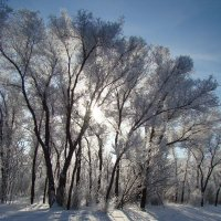 Зимнее солнце :: Юлия Васильева