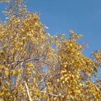 Небо ноября :: марина ковшова