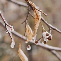 Первый снег :: Андрей Майоров