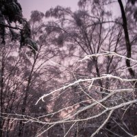 Лесные миражи :: Елена Грибакина