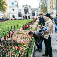 День памяти погибшим-Вестминстер :: Antonina Burton