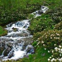 Горная река в рододендронах :: Антонина Петлевская