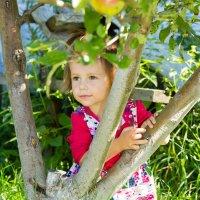 девочка с яблоками :: Сергей Стюняков