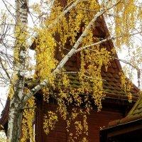 Осенние гирлянды :: Сергей Тарабара