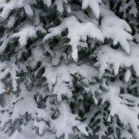 Переплетения Зимы .. :: Алёна Савина