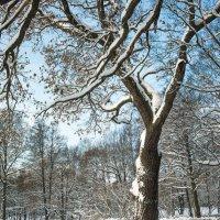 Снежный ноябрь 8 :: Виталий