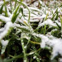 Под первым снегом :: Виталий Павлов