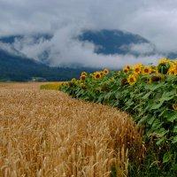 Красота Швейцарии :: Натали Пам
