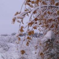 осень :: Алексей Логинов
