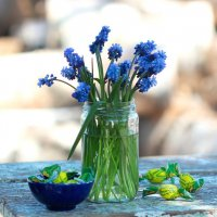 Мускарики и синяя чашечка с карамельками :: Наталья Казанцева
