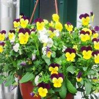 Цветы в интерьере :: татьяна