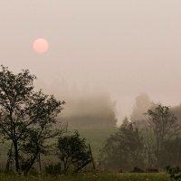Ловим туман :: Александр