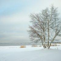 Снежный ноябрь 12 :: Виталий