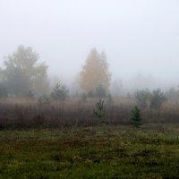 За туманом ничего не видно... :: Елена Пономарева