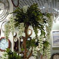Магазин часов :: Вера Щукина