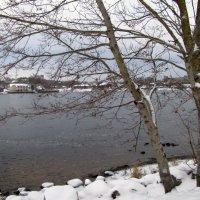 Зима нечаянно нагрянет.... :: veera (veerra)