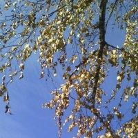 Ноябрьское небо :: марина ковшова