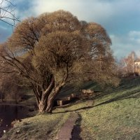 Дерево в парке... :: Валерий Молоток