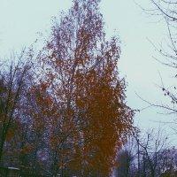 Зимняя осень.. :: Алсу Илькаева