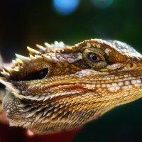 глаз дракона :: svabboy photo
