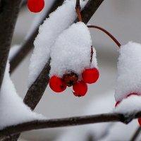 Зимняя картинка ноября :: Милешкин Владимир Алексеевич