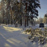 Околдован лес стоит, чудной жизнью он блестит 6 :: Сергей Жуков