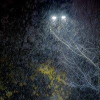 Утренний снегопад на Васильевском острове :: Владимир Шутов