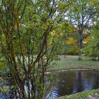 Осень у пруда. :: zoja