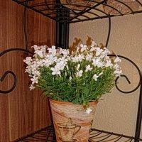 Белые цветочки. :: Nina Yudicheva
