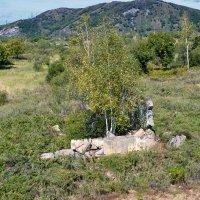 Дерево в доме :: Владимир Постышев