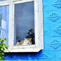 Котик. :: Береславская Елена