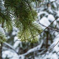 Оглянуться не успели, как зима катит в глаза... :: АЛЕКС