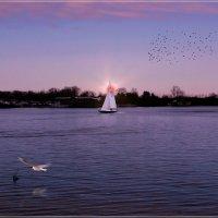 Грачи полетели и солнце садится. :: Anatol Livtsov