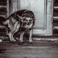 Собака камеры бояка. :: Лилия Ли
