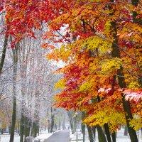 Когда осень встречается с зимой :: Вадим Качан