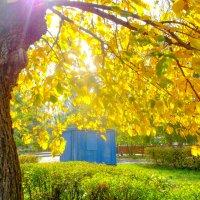 Солнце в листьях :: Вячеслав Баширов