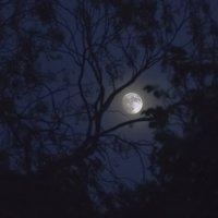 Ночь :: Ефим Журбин